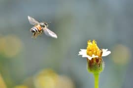 Bee flying to the flower